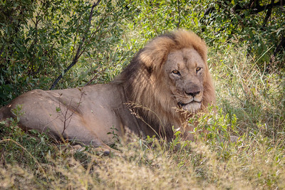 The Hide Hwange National Park, Zimbabwe, 2015