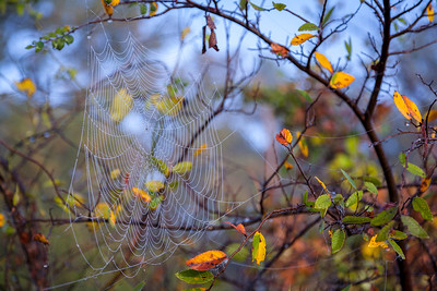 Fall Web III, Horseshoe Trail, 2009