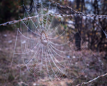 Fall Web II, Horseshoe Trail, 2009