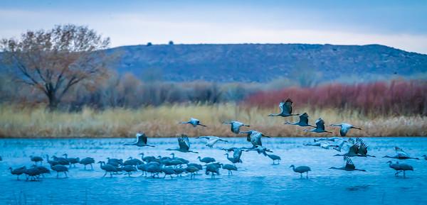 Cranes Taking Off II
