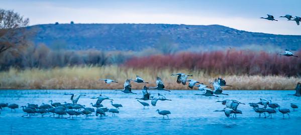 Cranes Taking Off I