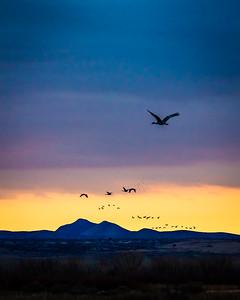 Sandhill Crane Sunrise