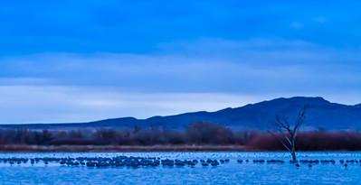 Huddled Cranes