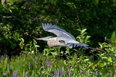 Gliding over the foliage