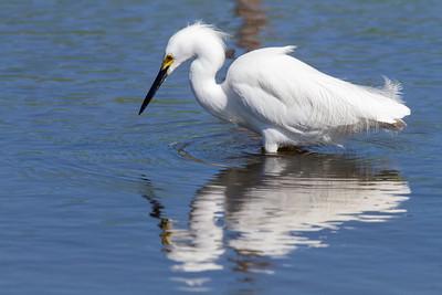 Ponds along Spur 108, Bolivar Peninsula, TX, 2013