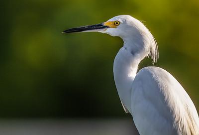 Green Cay Nature Center, Florida, 2011