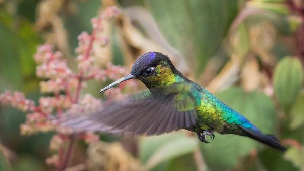 Paraiso Quetzal, San Gerardo de Dota, Costa Rica, 2017