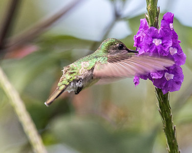 Rancho Bajo,Turrialba, Costa Rica, 2017