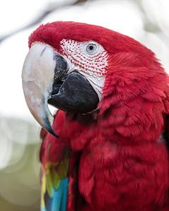 Dallas Zoo, Dallas, TX, 2015