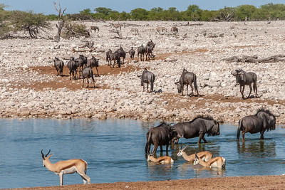 Leaving the Waterhole