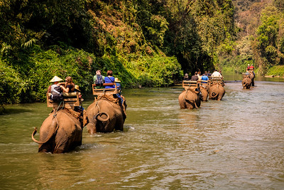 Returning Down River, Elephant Camp