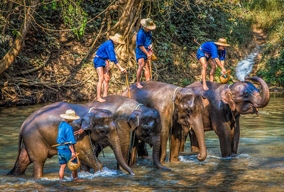 Getting Clean, Elephant Camp