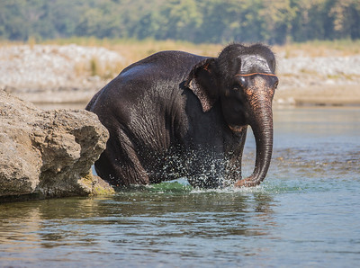 Asian Elephant Bath