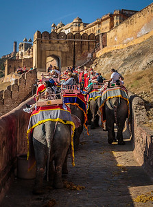 Elephant Ride to Fort