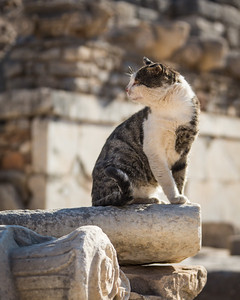 Temple Cats, Ephesus, Turkey, 2012