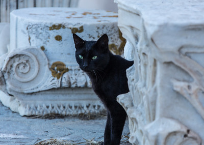 Temple Cat, Delos, Greece, 2012