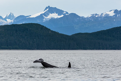 Orca Tale Up
