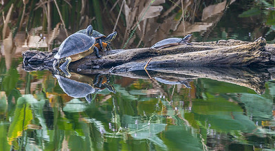 Turtle Stack
