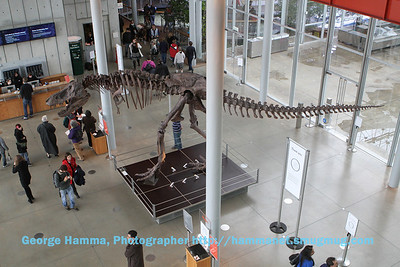 The entry to the museum includes an assembled dinosaur skeleton.