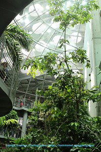From the bottom of the ramp that winds  to the top of the rainforest dome, you can see the canopy.