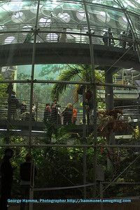 You can see the viewing ramps in the rainforest.
