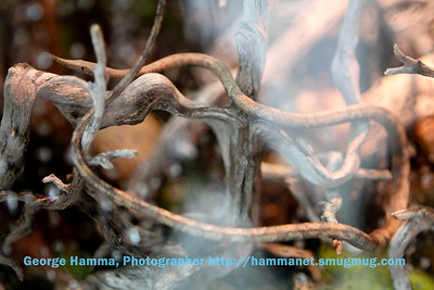 This snake looks remarkably like the branches it calls home.