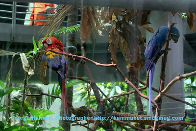 The macaws in the rainforest.