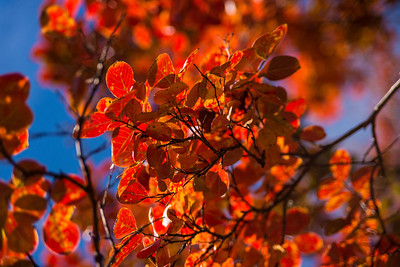 C&BA Foliage, Nov 18 2013