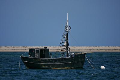 Cape Cod Bird Festival - Tern Island - September 20, 2014