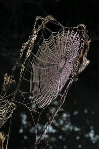 Cobweb Study 03