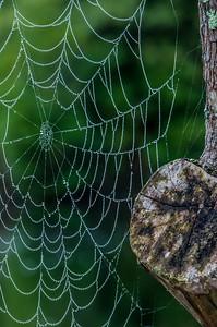 Cobweb Study 14