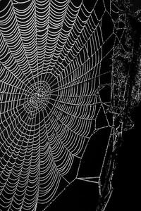 Cobweb Study 02