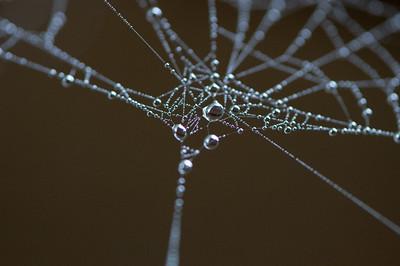 Cobweb Study 12