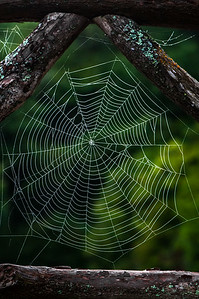 Cobweb Study 01