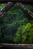 Cobweb Study 09
