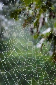 Cobweb Study 08