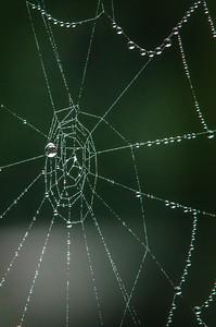 Cobweb Study 04
