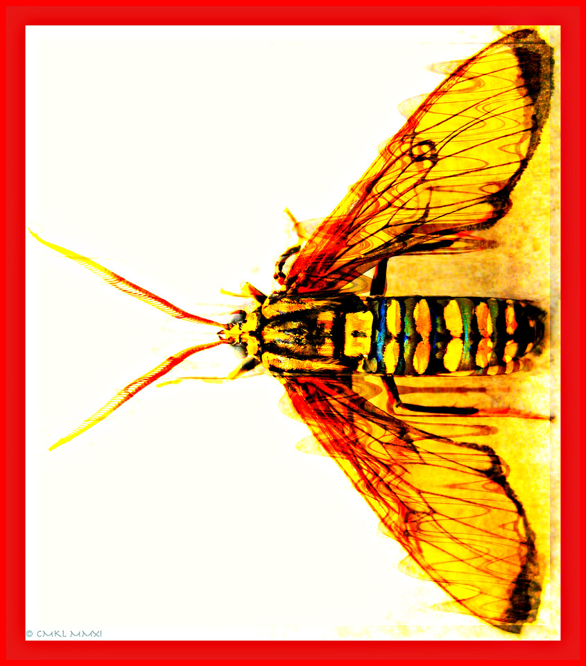 Having fun with my newly discovered tiger moth (I'm a tiger in the Chinese reckoning)<br /> My favorite quote from the film noîr with Alan Delon 'Le Samouraï''<br /> <br /> II n'y a pas de plus profonde solitude que celle du samouraï; <br /> si ce n'est celle du tigre dans la jungle, peut-être...