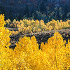 Temple Fork, Logan Canyon, Utah