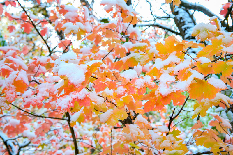 Early Fall in Logan Canyon