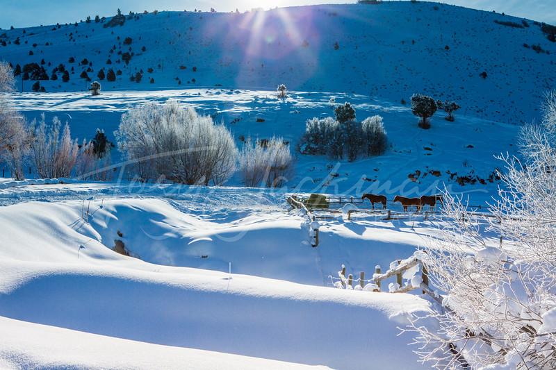 Winter Corral