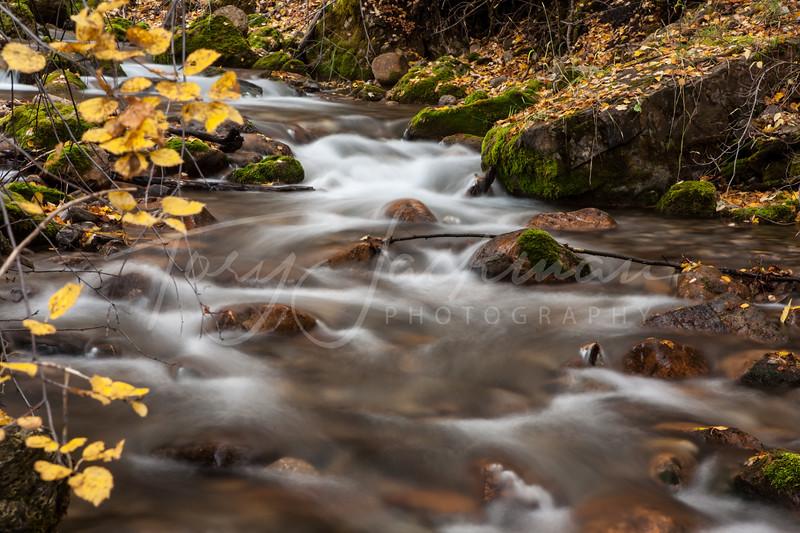 Logan Canyon Stream