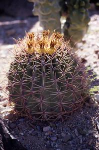 Arizona-2003--45