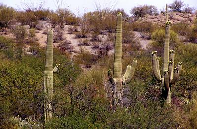 Arizona-2003--4