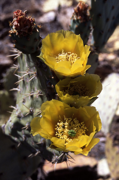 Arizona-2003--16