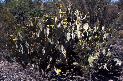 Arizona-2003--24