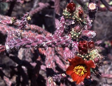 Arizona-2003--18