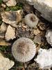 Button Cactus (3)