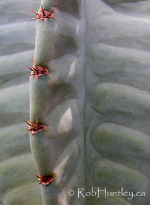 Columnar cactus close-up.