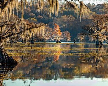 Caddo Lake 2020-48